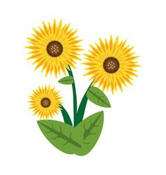 sunflower spring image icon vector image vector image