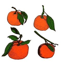 Tangerine sketches vector image