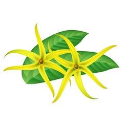ylang-ylang vector image