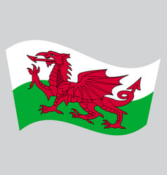 flag of wales waving on gray background vector image