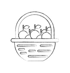 straw basket with apples vector image