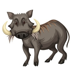 Wild pig with sharp teeth vector