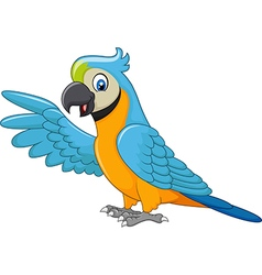 Cartoon macaw presenting isolated vector image