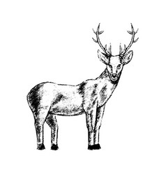 deer icon grunge style vector image vector image