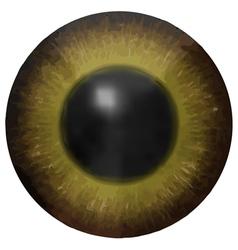 Eye iris texture vector