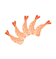 Shrimp Sashimi or Ebi Sashimi on White vector image
