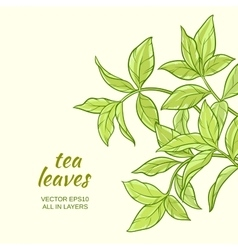 Tea leaves background vector