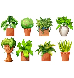 A collection of the different pot plants vector