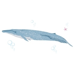 blue whale realistic flat vector image
