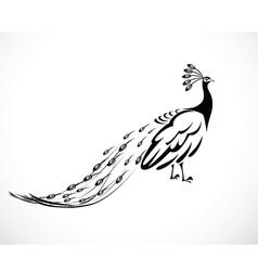 Peacock 3 vector