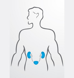Kidneys and human body - vector