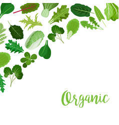 organic banner with salad leaves vector image vector image