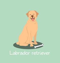 An depicting labrador retriever dog cartoon vector
