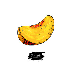 peach slice drawing isolated hand drawn vector image