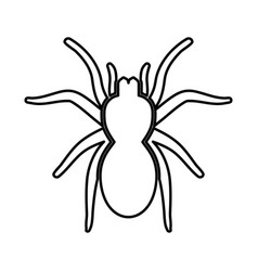 Spider or tarantula black icon vector