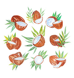 Coconuts with palm leaves set of watercolor vector