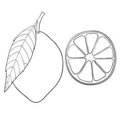Lemon hand drawn outline sketch vector