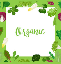 Organic banner with leaves square frame vector