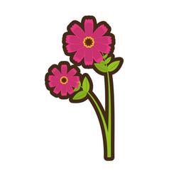 cartoon pink cosmos flower spring icon vector image