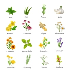 Medicinal herbs plants flat icons set vector