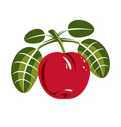 Red simple cherry with green leaves ripe sweet vector