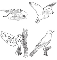 Storytelling birds vector