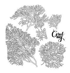 Graphic coral collection vector image
