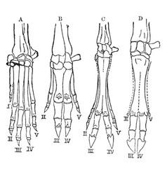 Hands of vertebrates vintage vector
