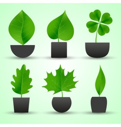 simple nature leaf of tree in pot colorful icons vector image vector image