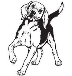 beagle hound black white vector image vector image