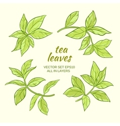 Tea leaves set vector
