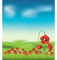 Poppy with Grass4 vector image