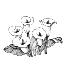 Calla lilly floral black and white vector image