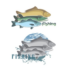 Pike perch vector