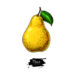 Pear drawing isolated hand drawn object on vector