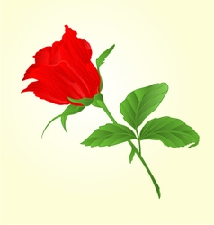 Rosebud red rose twig with leaves vector