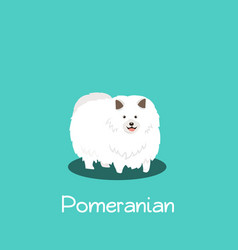 An depicting pomeranian dog on turquoise vector