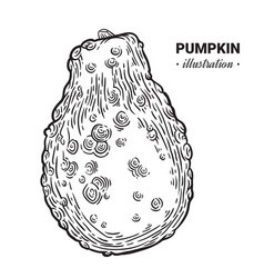 decorative pumpkin fresh food hand drawn vector image vector image