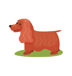 English cocker spaniel dog purebred pet animal vector