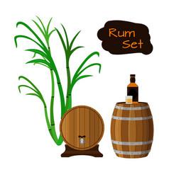 rum set sugar cane helm barrels glass bottle of vector image