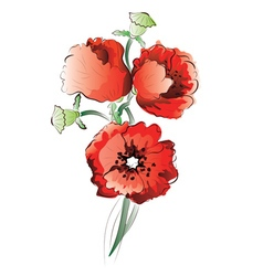 Red poppy flowers3 vector