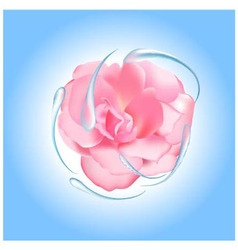 Rose with water vector