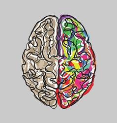 Creative brain with color strokes vector image vector image