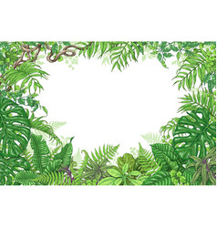 tropical plants rectangle frame vector image vector image
