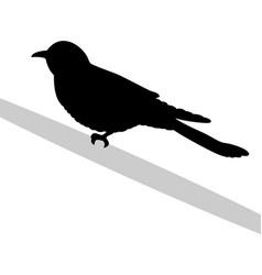 cuckoo bird black silhouette anima vector image