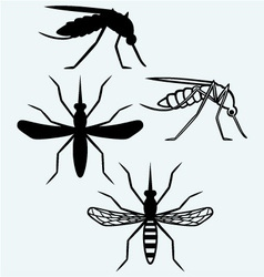 Mosquito vector image