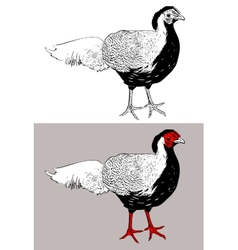 Digital drawing of male silver pheasant lophura vector
