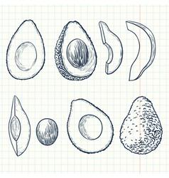 Doodle avocado vector