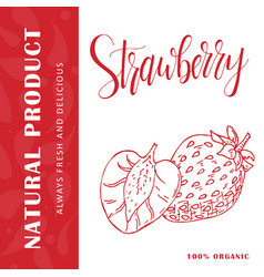 Hand drawn fruit sweet strawberry vector