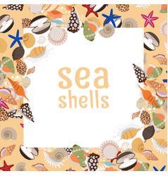 Sea shells background with square frame vector
